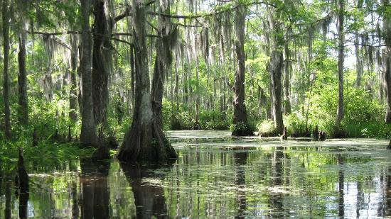 Sounds Of The Bayou